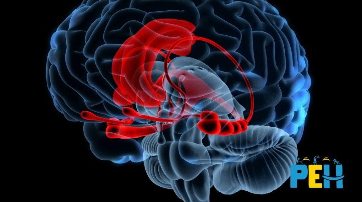 Pourquoi dit-on que le cerveau de l'enfant est immature ?