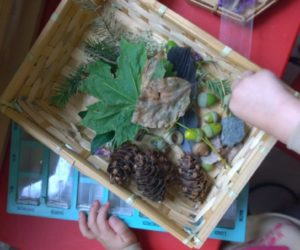 Activité Montessori : la table d'observation (ou de découverte)