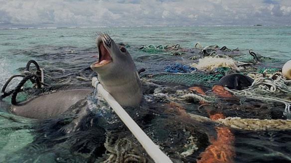 Ces photos déchirantes montrant l'impact de la pollution sur les animaux