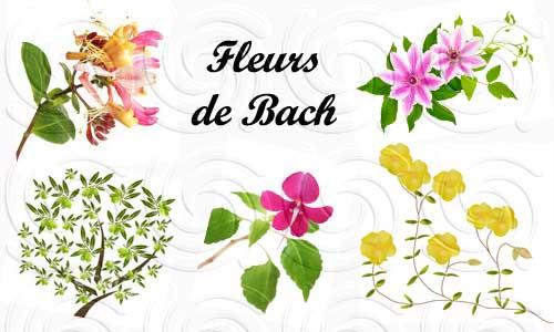 les fleurs de bach un rem de pour nos enfants oummi materne le blog d 39 une famille positive. Black Bedroom Furniture Sets. Home Design Ideas